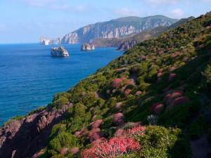 Macchia mediterranea sul mare
