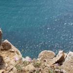 Fiori sulle rocce